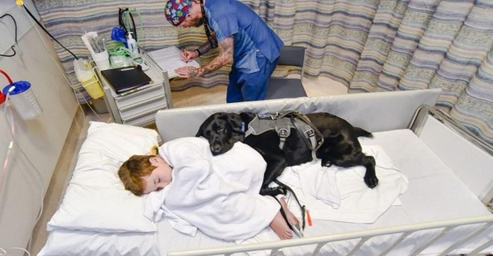 Este leal perrito cuida a su mejor amigo con autismo hasta en la cama del hospital