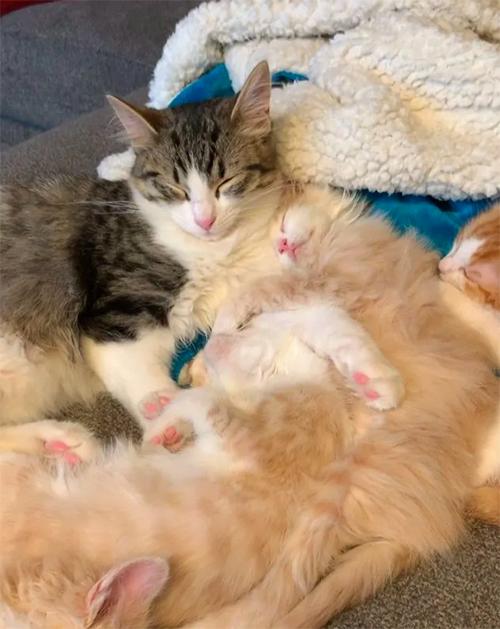 Pete gatito tuvo 3 hogares