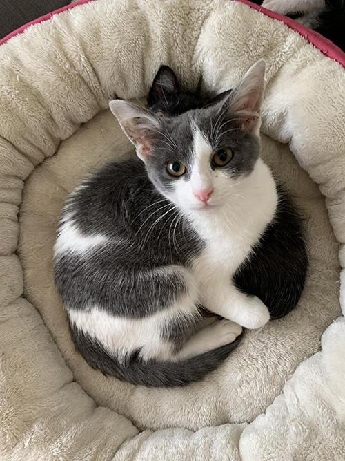 Pistachio gatita rescatada en Los Angeles
