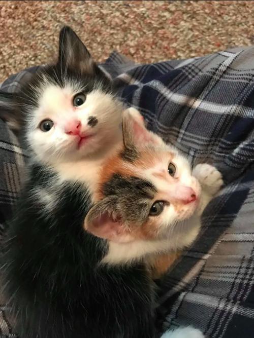Roxie y sus gatitos