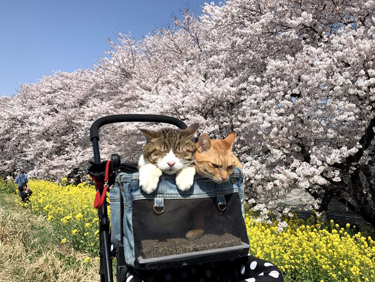 The Travelling Cats