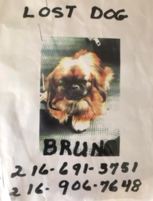 Bruno pekinés perdido en Ohio