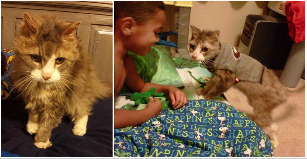 Adopta un gato vagabundo de 18 años para darle un hogar en sus últimos días y vive 5 años más