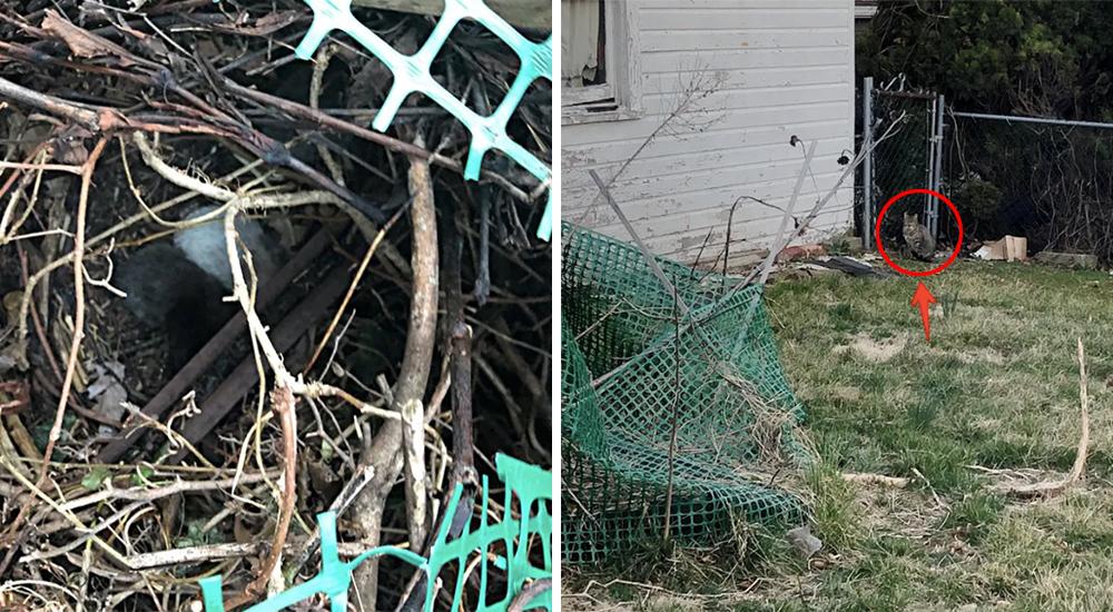 Gatos rescatados en un nido