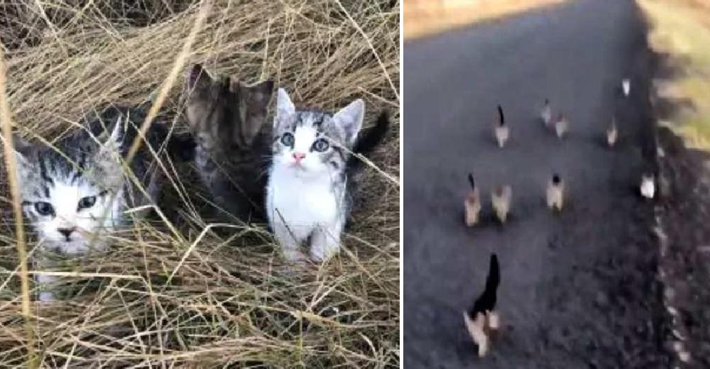 Diez asustados gatitos siguen a una joven y su perrita confiando poder salvarse