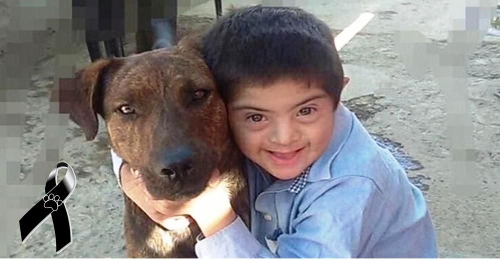Envenenan al perro de terapia emocional de un pequeño con Síndrome de Down