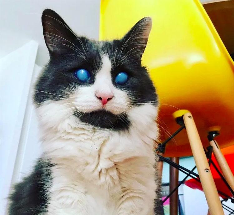 Louie el gato ciego