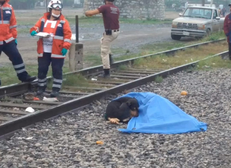 Perro incondicional México