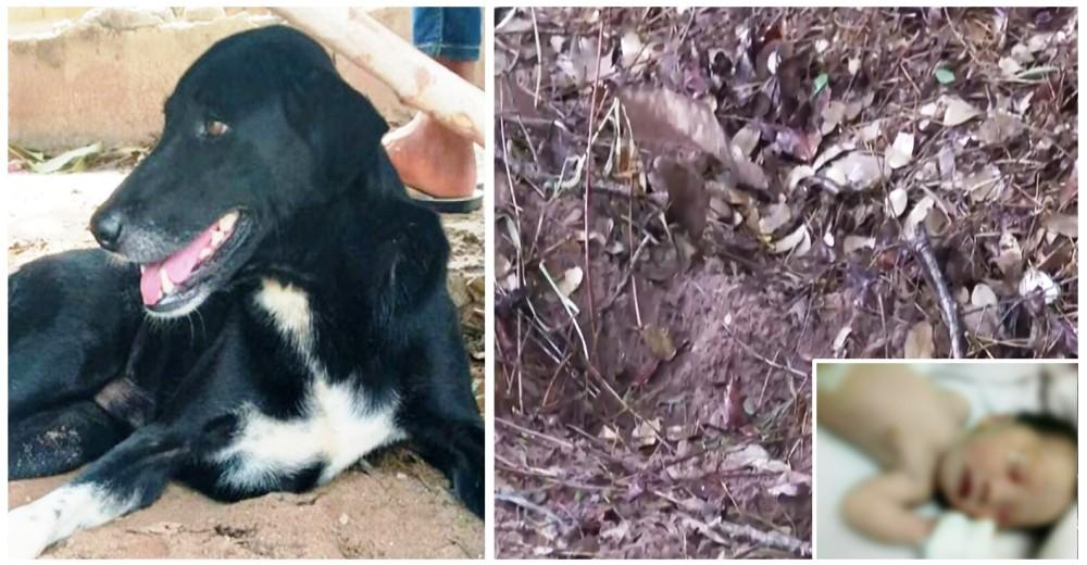 Un perro de necesidades especiales salva a un bebé recién nacido tras ser sepultado por su madre