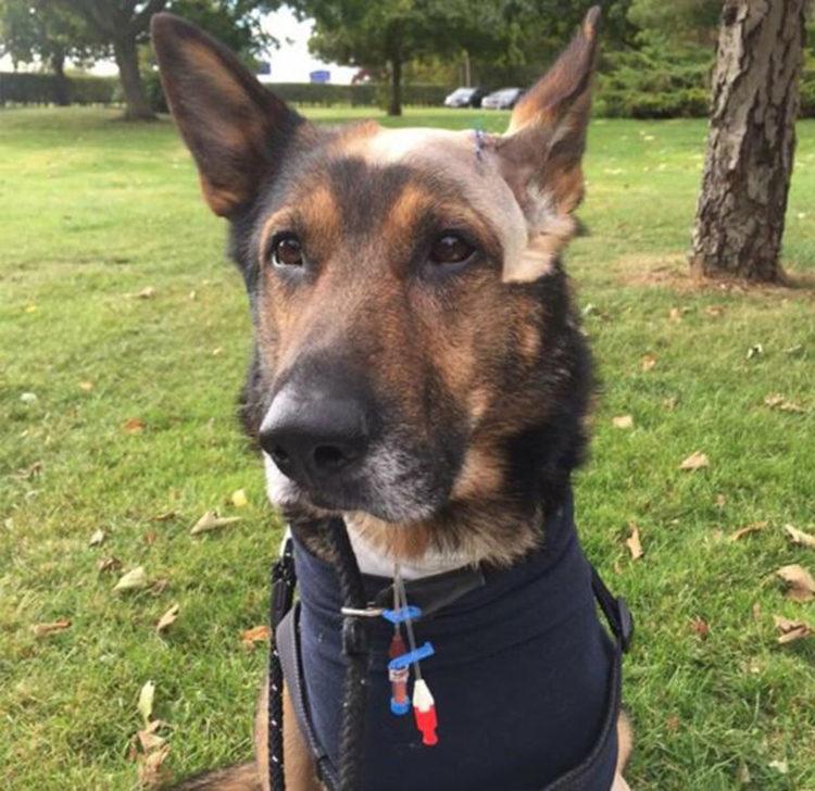 police-dog-finn