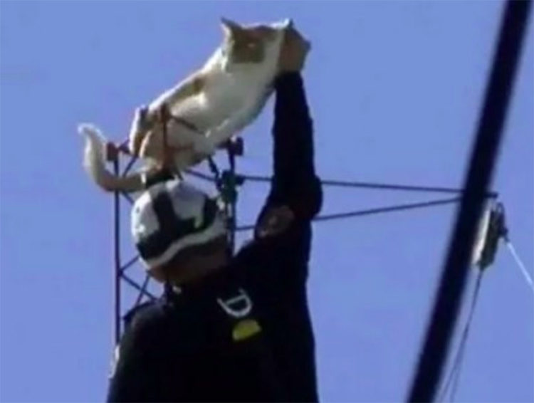 Bombero rescata gatos en Argentina