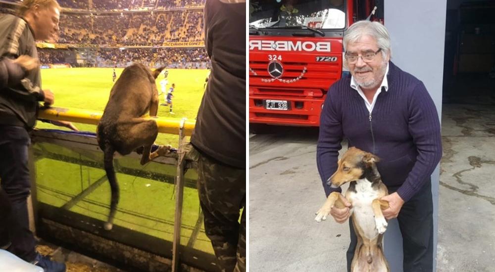 Firulais perro futbolista