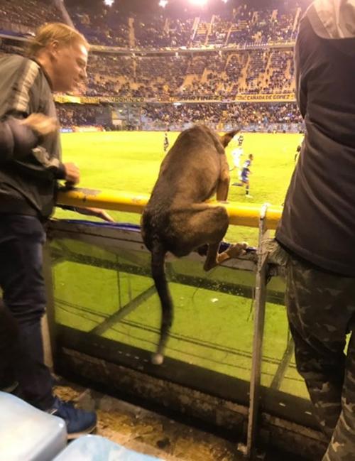 Firulais perro de La Boca Argentina 3