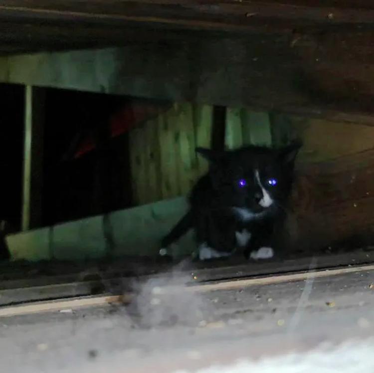 Gatito atrapado en atico