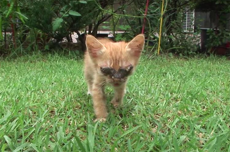 Gatito ciego ve a su madre