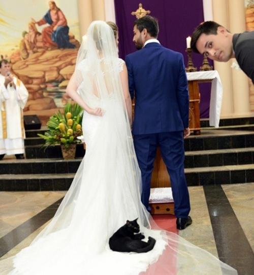 Gato negro se cuela en boda