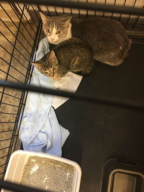 Gatos abandonados en cajas