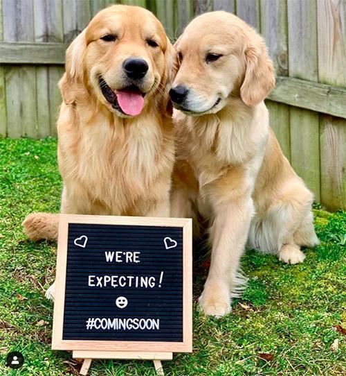 Hopper y Zu anuncian su embarazao