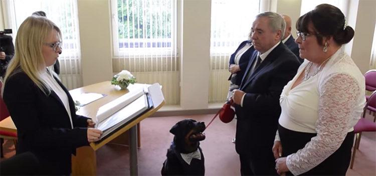 Jack perro padrino de bodas