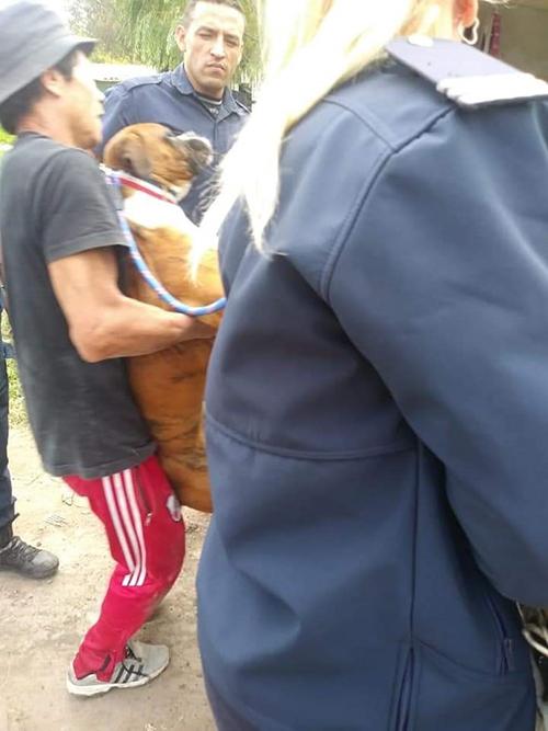 Mujer policía salva perro
