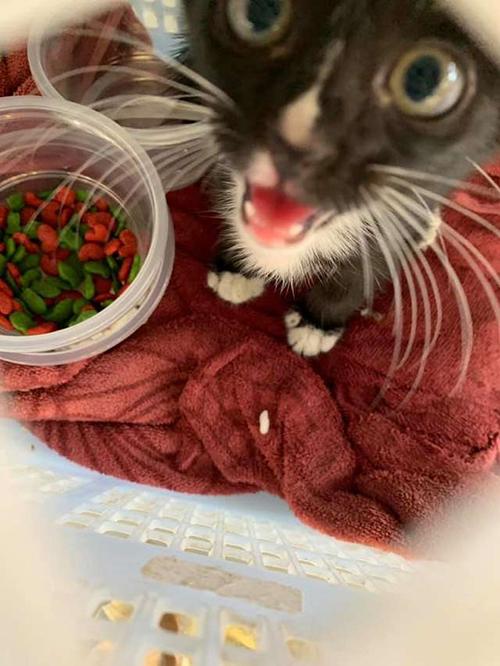 Pareja salva gatito Tailandia