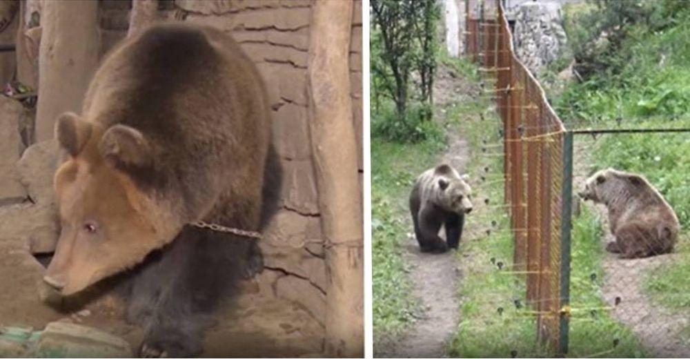 Un oso ha vivido solo toda su vida, hasta que ve a otro de su especie por primera vez