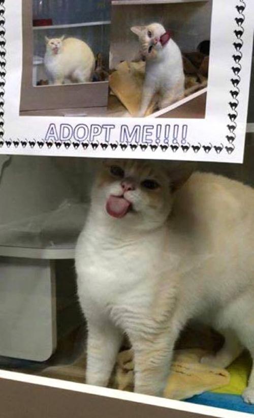Sigmund gato alocado