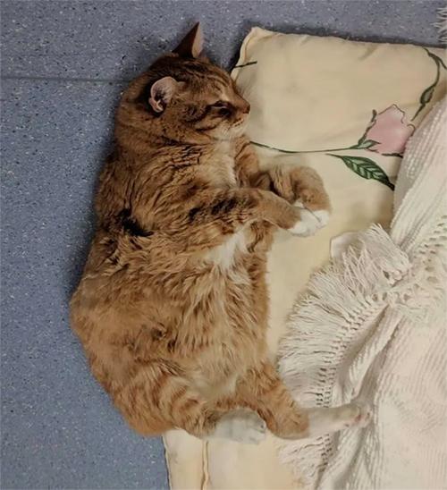 Walter gato enfermero