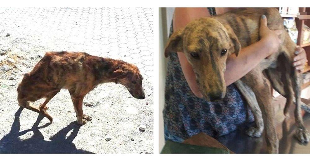Mujer que estaba de vacaciones rescata un perrito con la columna fracturada y se lo lleva a casa