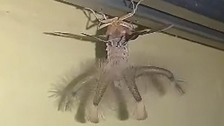 Un Hombre Descubre A Una Enorme Criatura Alienigena Arrastrandose
