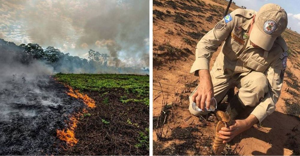 Ayudar a los animales afectados por el incendio del Amazonas está en TUS MANOS