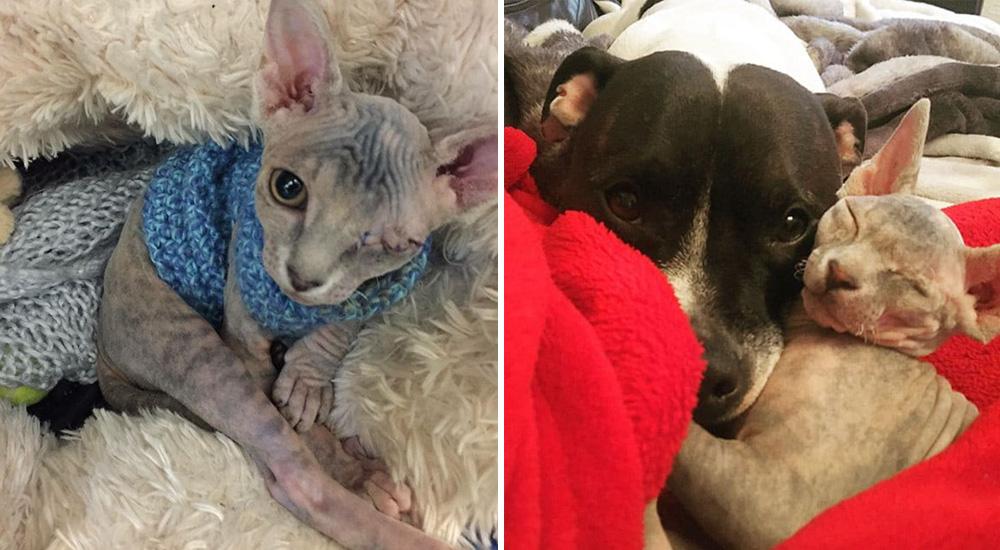 Un gatito rescatado de un solo ojo encuentra en un Bull Terrier todo el amor que necesitaba
