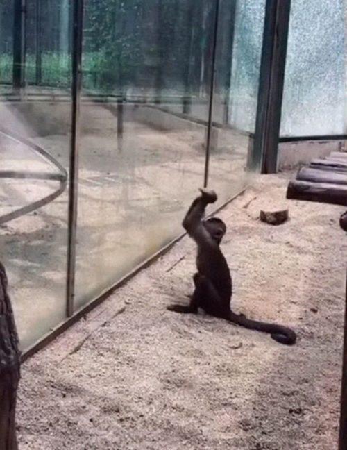 Turistas de un zoo ven cómo un mono afila una piedra y luego