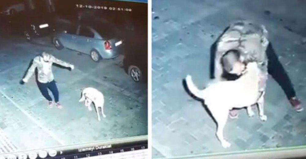 Cámara de seguridad graba a un hombre que se puso a bailar con un perrito de la calle