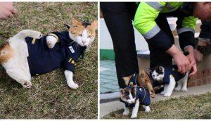 Gatita callejera embarazada escoge una comisaría para quedarse con sus gatitos y le dan trabajo
