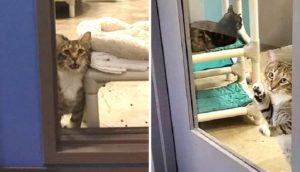 Gatito de un refugio es puesto en confinamiento solitario por su curiosa solidaridad extrema