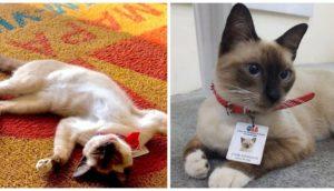 León, el gato callejero contratado en un bufete como abogado para no ser discriminado