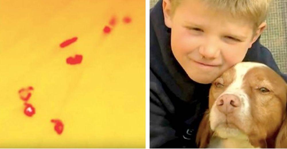 La impactante historia del niño desaparecido con su perro que fueron hallados gracias a un dron