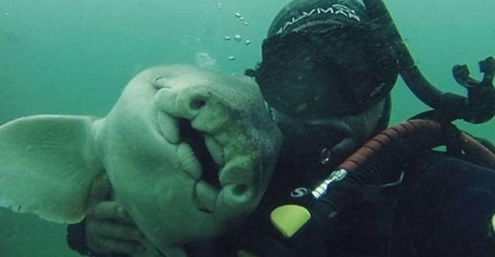 Graban al tiburón hembra que nada desesperada hasta un buzo cada vez que lo ve