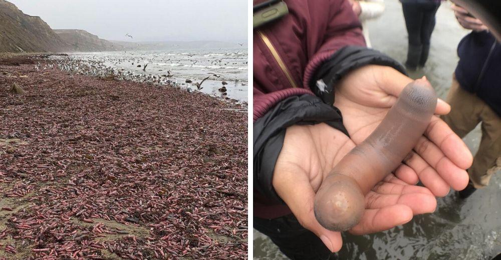"""Miles de """"penes"""" rosa aparecen en una playa concurrida cubriendo toda la costa"""