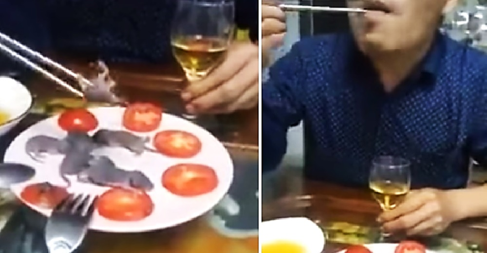 Graban a un hombre asiático sumergiendo ratoncitos bebés en una salsa antes de comérselos vivos