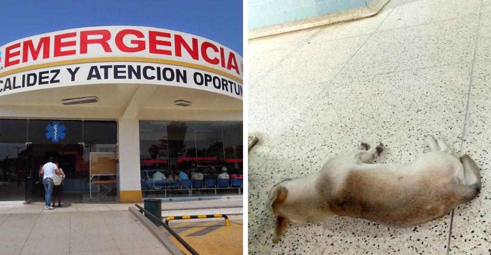 Buscan hogar para el perrito que esperó un mes en el hospital a su dueño sin saber que murió