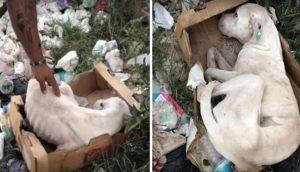 Se refugia lejos de una montaña de perritos muertos para evitar terminar como ellos