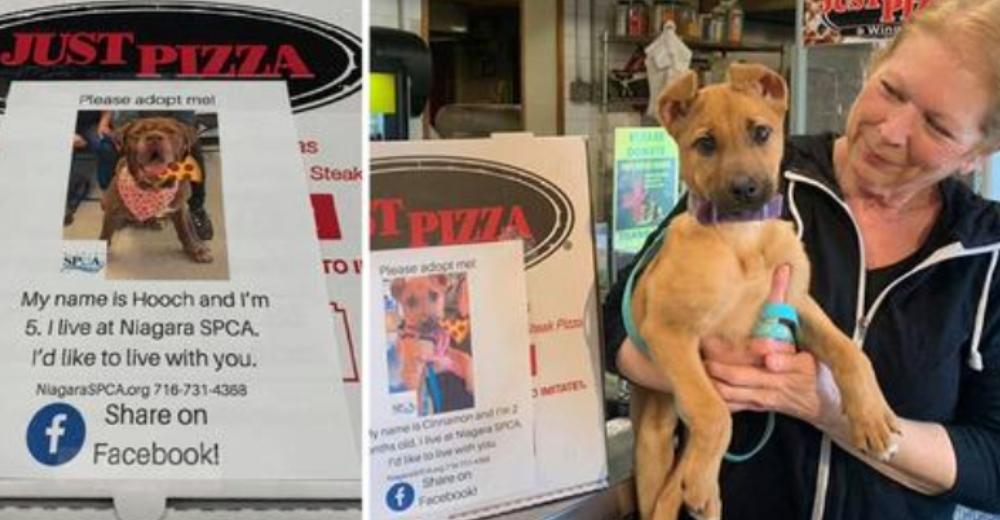 Pizzería pone fotos de perros abandonados en las cajas de pizza para ayudarlos a conseguir hogar