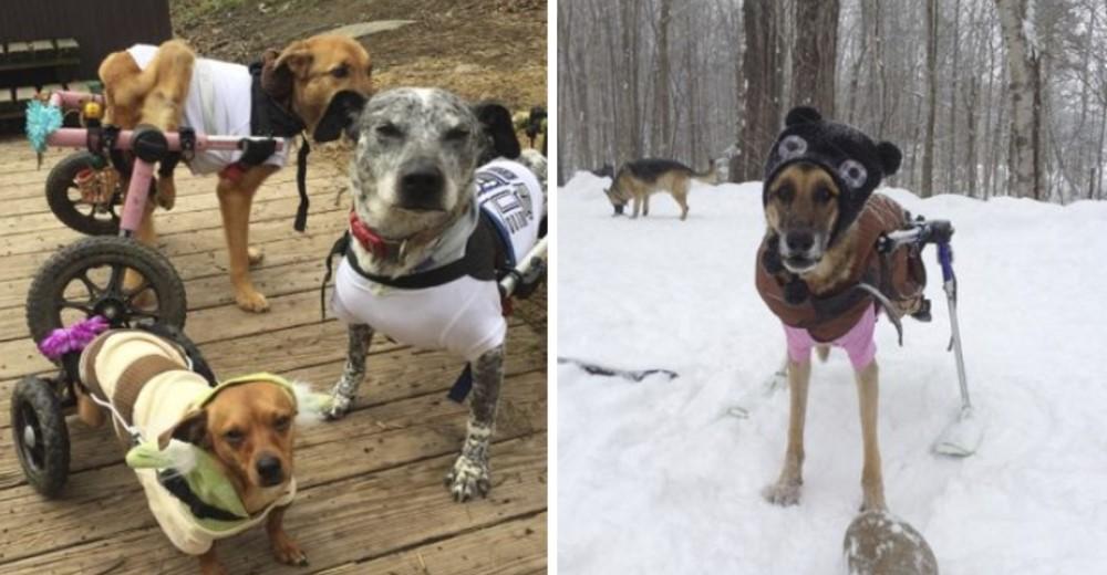 Mujer adopta a 6 perros con necesidades especiales cambiando su vida para siempre