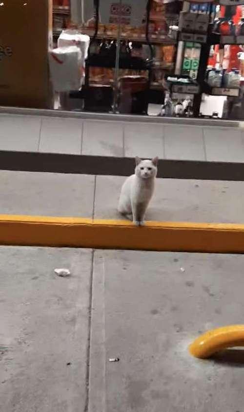 Gatito espera a que le compren comida