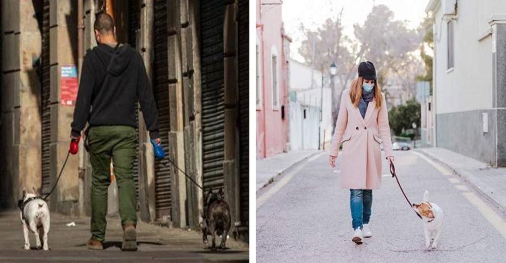Polémica tras la la prohibición del Gobierno de sacar a pasear a los perros en la cuarentena