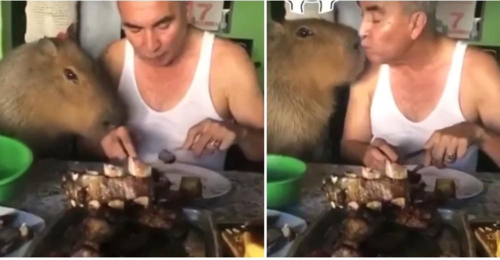 Graban al roedor más grande del mundo que come del mismo plato que su dueño