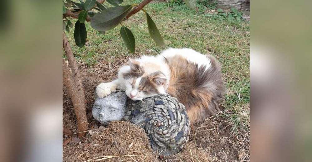 Una gatita no puede dormir si no es acurrucada a su nuevo mejor amigo de roca