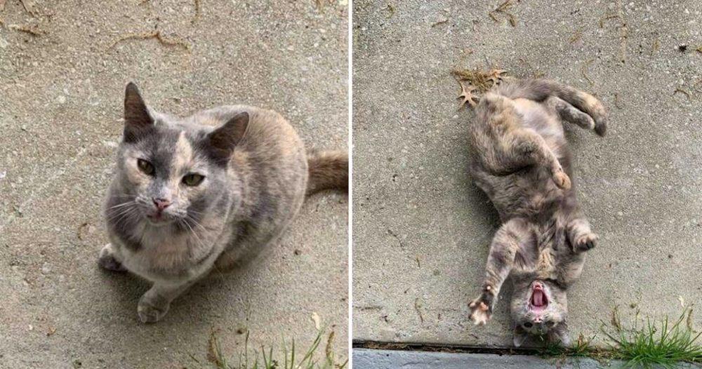 """""""Me compré una casa y aparentemente viene con gato incluido"""""""